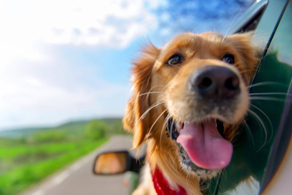 Choosing a Pet's Caregiver
